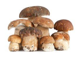 купить свежие белые грибы в Москве